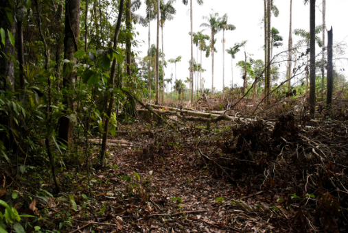 A photo of deforestation in the Amazon rainforest