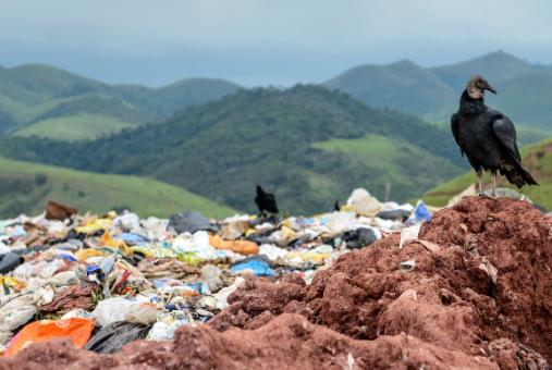 Impacto do aquecimento global na saúde pública é tema atual para jornalistas. Foto: divulgação