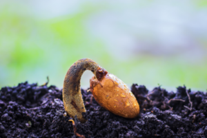seed in dirt
